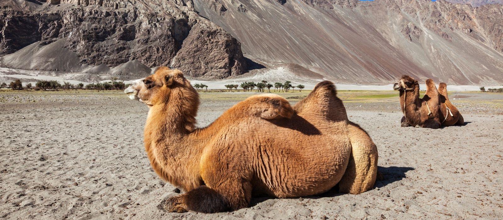 Leh_ladakh_tour_package1600X700